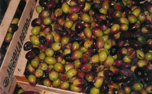 Italian Olives